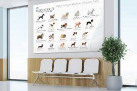 Total Alimentos | Equilíbrio Veterinary – Pôster Raças Pequeno Porte